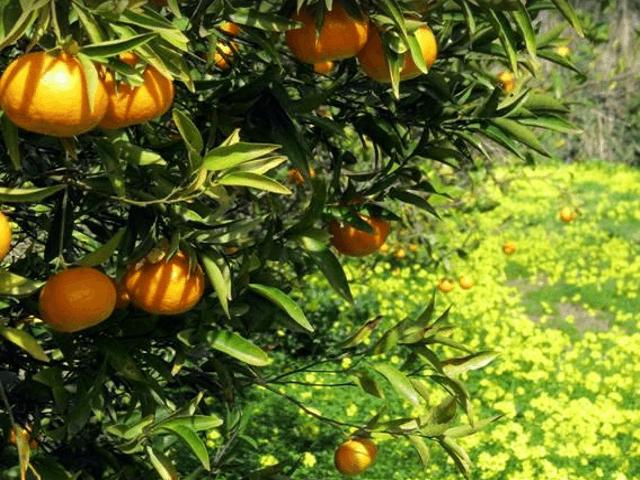 sardinie-duurzame-agriturismo (2).png