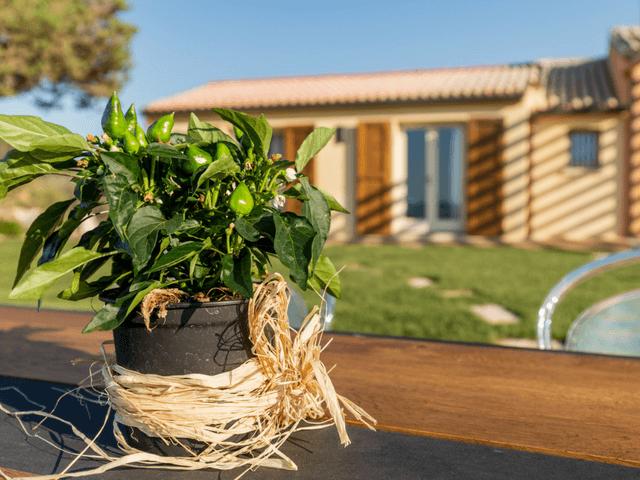 agriturismo sardinie - tenuta petra bianca - sardinia4all (4).png