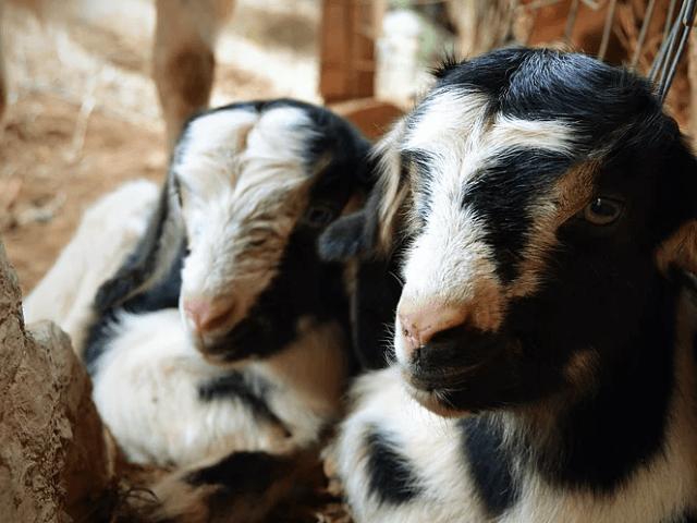 Nurrazolas Agriturismus bei Costa Rei - Sardinien