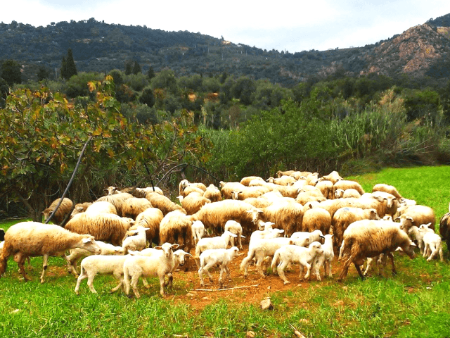 agriturismo su solianu, bari sardo - sardinien  (2x)  (2).png