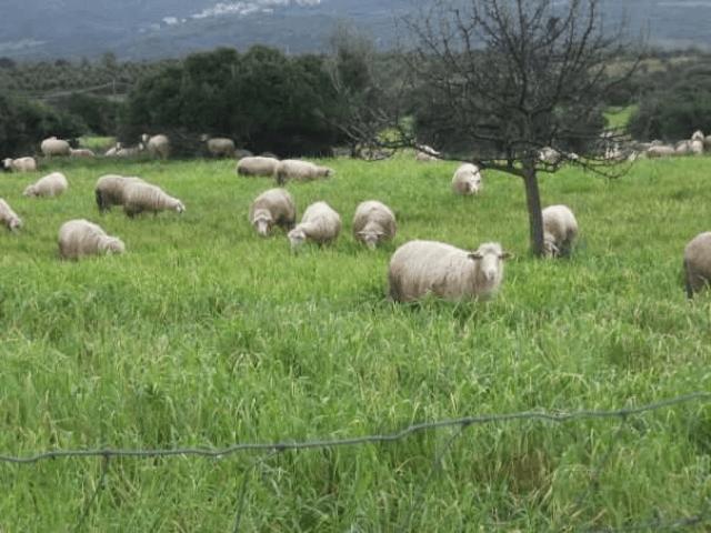 agriturismo sa murta - sardinia4all (7).png