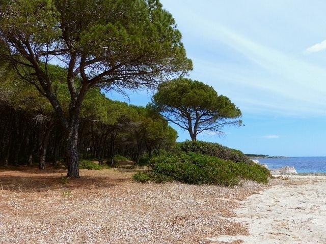 matta e peru beach sardinien sardinia4all (2).jpg