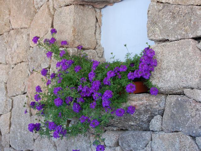 Detail - Hotel Nuraghe Arvu Resort - Cala Gonone - Sardinië