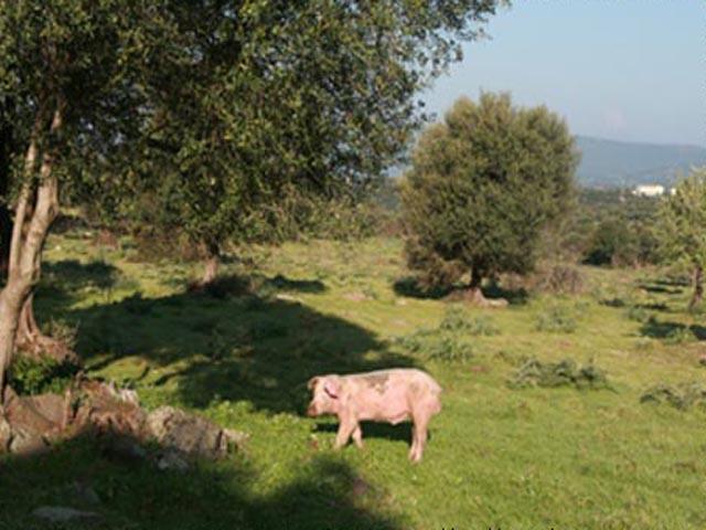 Agriturismo Sardinie - Dorgali - Boerderij Neule (14)
