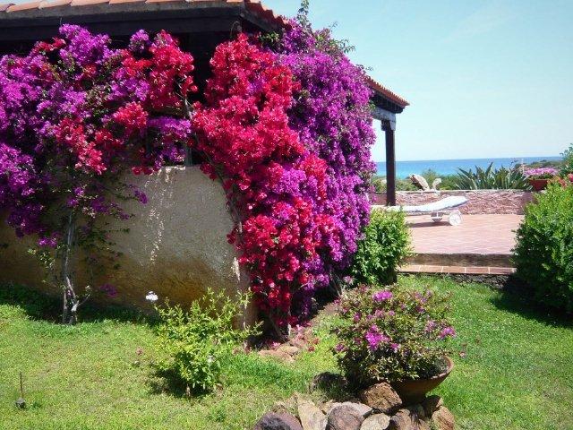 Villa Sara - Costa Corallina 17